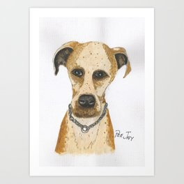 Mongrel Dog Art Print