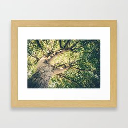 up tree Framed Art Print