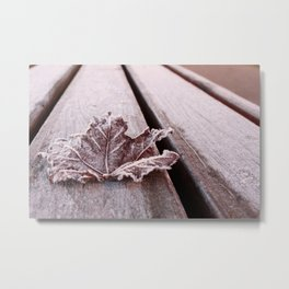 Frosty leaf Metal Print