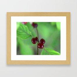 Red berrys 2 Framed Art Print