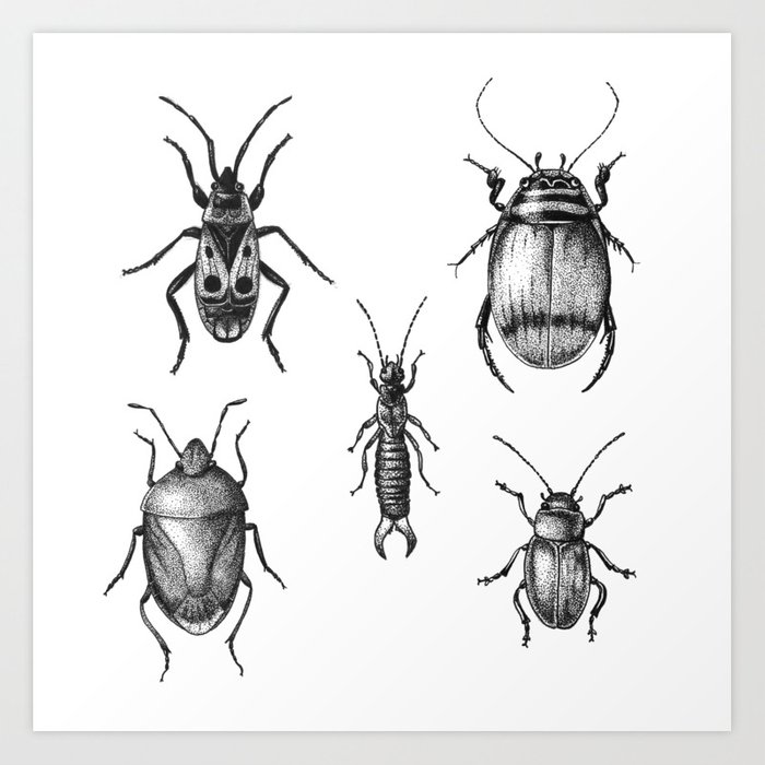 Insects 1 bugs and beetles art print