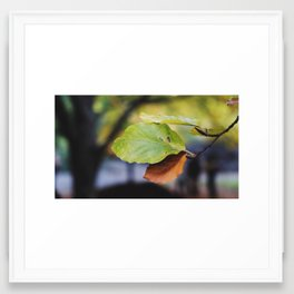 Central Park Fall Series 6 Framed Art Print