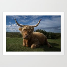 Rugged Highland Cow Art Print