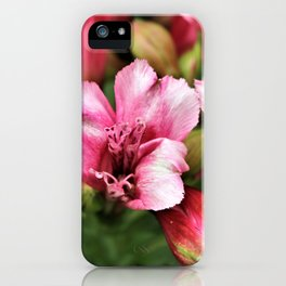 Passionate Pink Petals - Hope iPhone Case