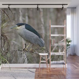 black crowned night heron Wall Mural