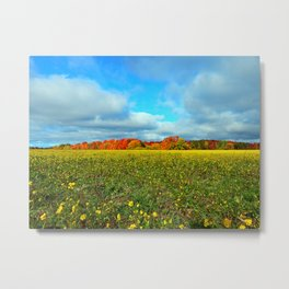 Autumn's Contrasts Metal Print