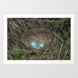 Robins nest with eggs Art Print