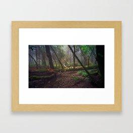 early morning, laurel dell Framed Art Print