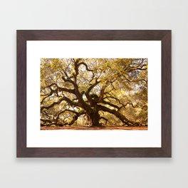 Angel Oak 5 Framed Art Print