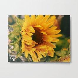 Yellow Sunflower Photo Metal Print