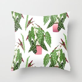 Simple Potted Polka Dot Begonia Plants in White Throw Pillow