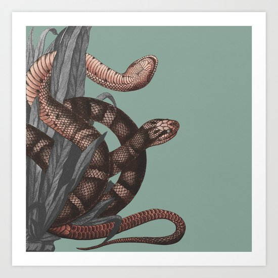 Snakes (animals collection) Art Print