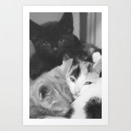 Pile of Kittens Art Print