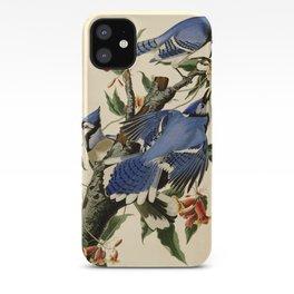 Blue Jay (Cyanocitta cristata) iPhone Case