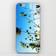 out back iPhone & iPod Skin