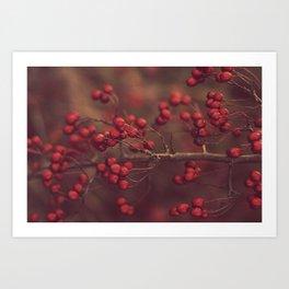 Winter Berry Art Print
