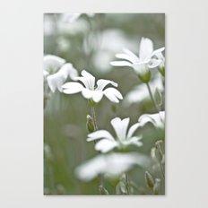 Stitchwort. Canvas Print