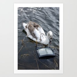 Swan watching its reflection on a tv Art Print