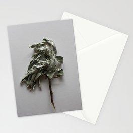 Olea twig herbal wall art Stationery Cards