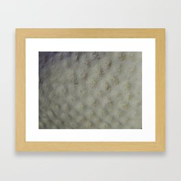 Star Coral Framed Art Print