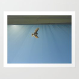 sunlight wings Art Print