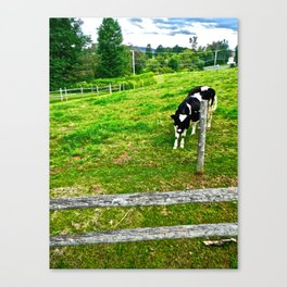 Ben or Jerry? Canvas Print