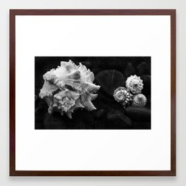 Shell No.8 Framed Art Print