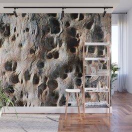 Old Eucalyptus Tree Wood Wall Mural