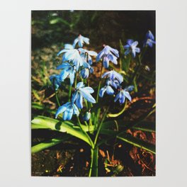 just a lovely flowers Poster
