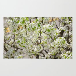 this year's blossoms Rug