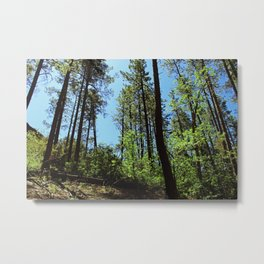Among the Trees in the Wood Metal Print