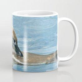 Humboldt penguin (Spheniscus humboldti) Coffee Mug