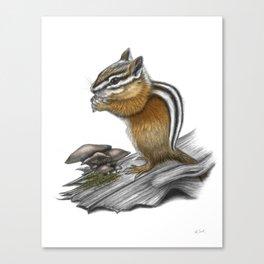 Chipmunk and mushrooms Canvas Print