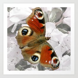 Peacock Butterfly on Pink Spring Blossom Art Print
