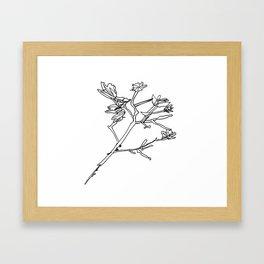 Crepe Myrtle 1 Framed Art Print