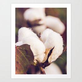 Cotton Field 24 Art Print
