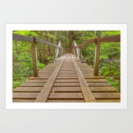 Forest Track Bridge Art Print