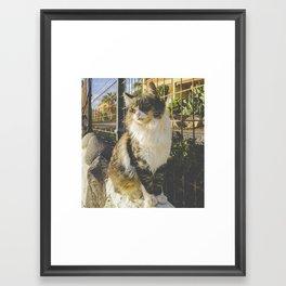 Gato de Lanzarote Framed Art Print