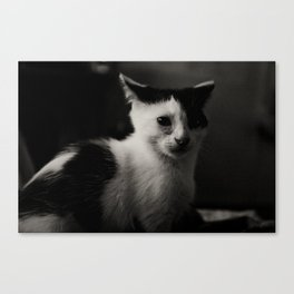 Scared Canvas Print