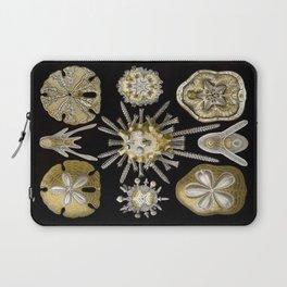 Ernst Haeckel Echinidea Sea Urchin Laptop Sleeve