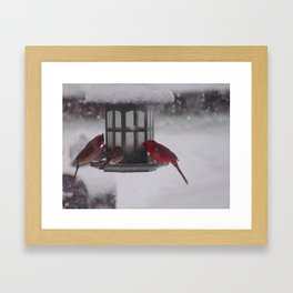 Bird Feeder Framed Art Print