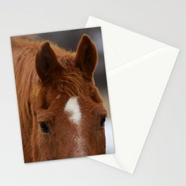 Red - The Auburn Horse Stationery Cards