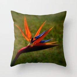 Strelitzia Throw Pillow