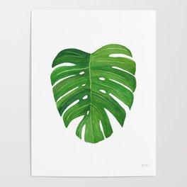 Monstera Deliciosa Leaf Poster