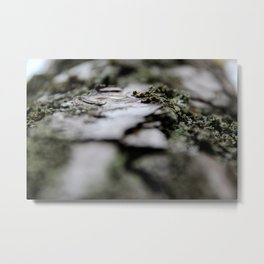 with a tree Metal Print