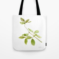 A branch of the tree Psidium fortium Tote Bag