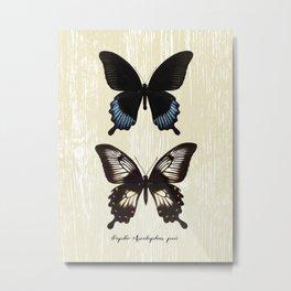 Butterfly10_Papilio Ascalaphus pair Metal Print