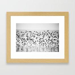 Dunlin I Framed Art Print
