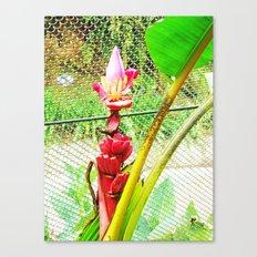 Tropical Petals Canvas Print