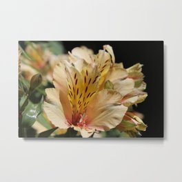 Close Yellow Blooms Metal Print
